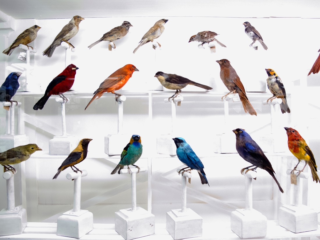 Birds, Museo della Specola, Firenze 2010
