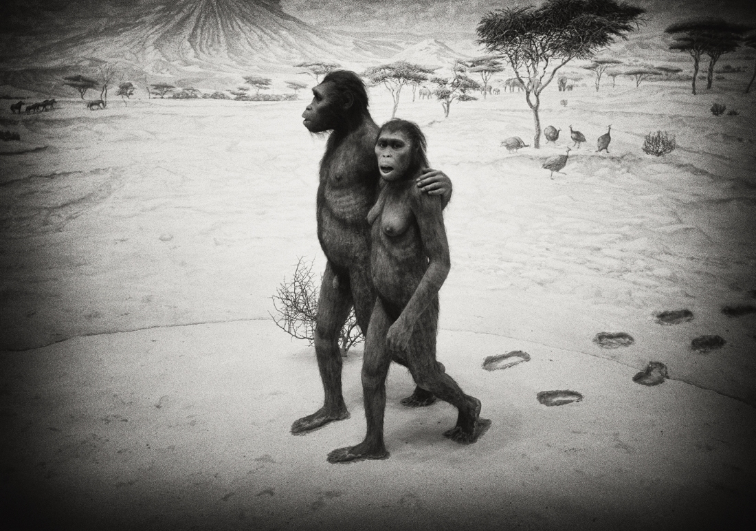 Hominids, Museum of Natural History, New York 2001